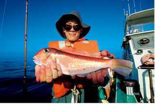湘南のアマダイ好感触。潮が動けば大釣りも!