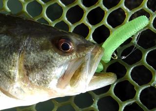 を 英語 魚 釣る
