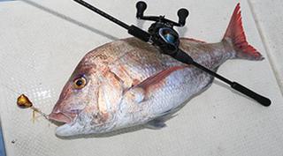 鯛ラバを用いた釣り方特集!船以外に堤防からでもマダイが釣れる!おすすめアイテム10選