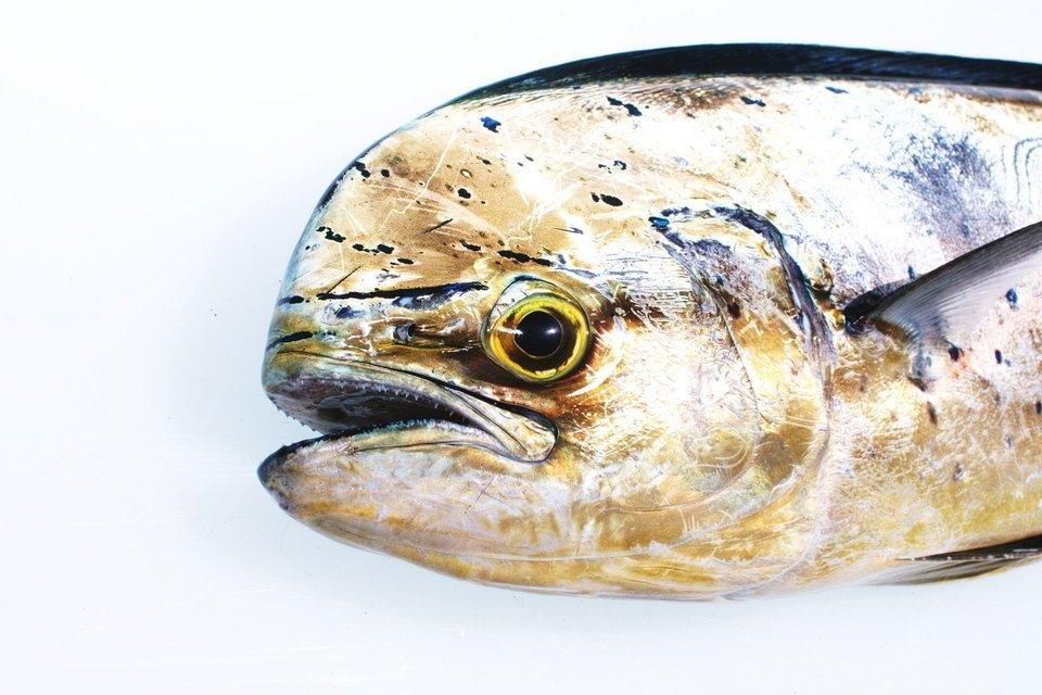 マヒマヒ シイラ 釣り ハワイ