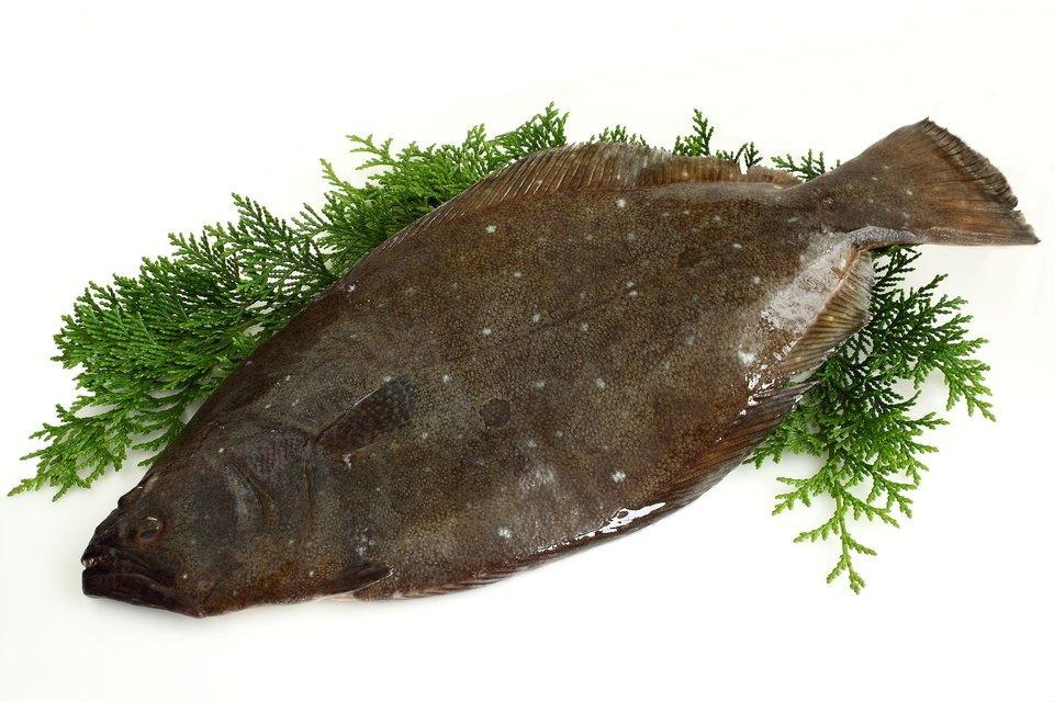 ヒラメ 魚