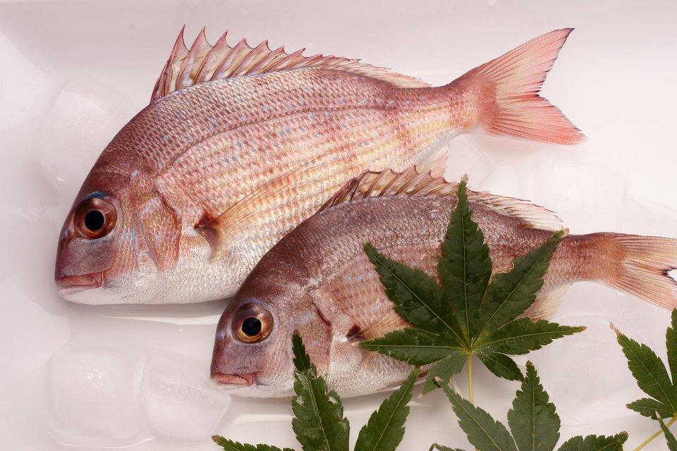 マダイ 魚
