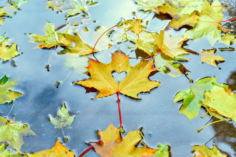 雨 池 落ち葉