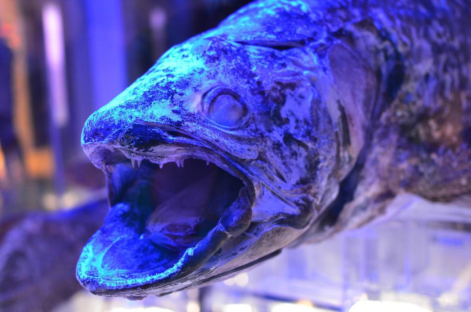 シーラカンスが冷凍されてる!?深海魚ファン憧れの地、沼津港深海水族館「シーラカンスミュージアム」をご紹介!!