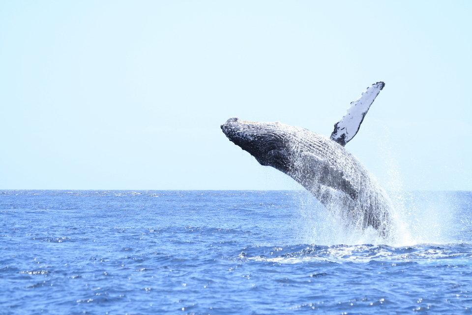 クジラ 画像