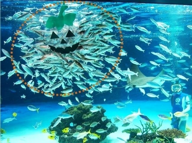 サンシャイン水族館 海ハロ 写真