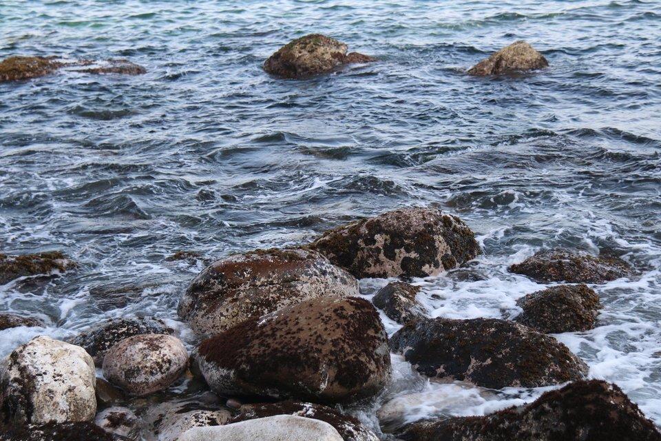 氷水 アジ 締め方 写真