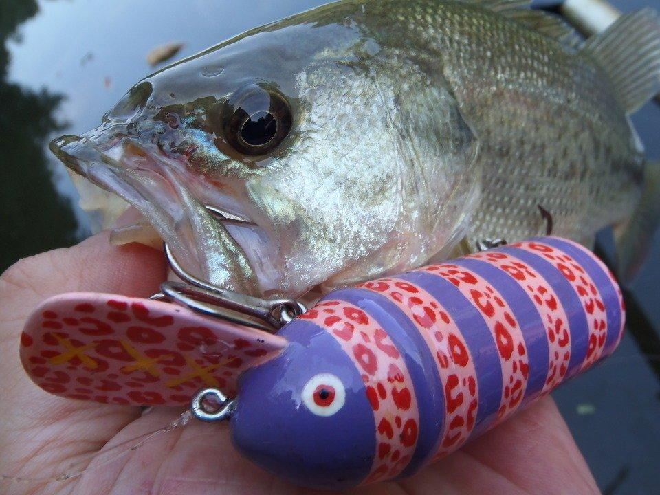 オールドルアーで釣りを楽しもう!ビッグバドで秋バスを狙うときの使い方をご紹介!