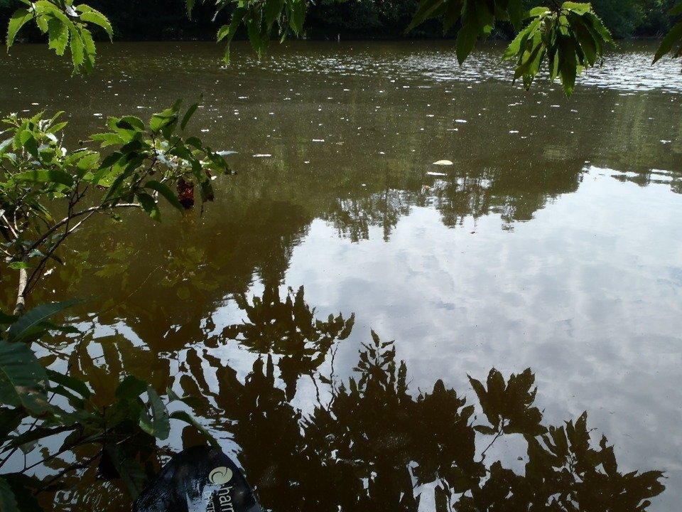 水面 写真
