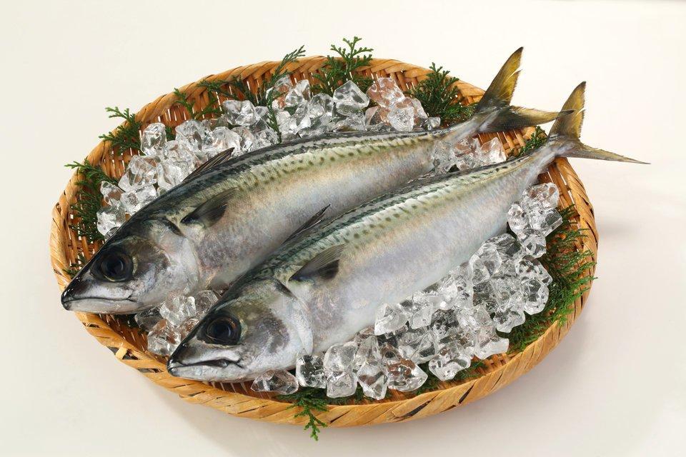 サバ 魚 写真
