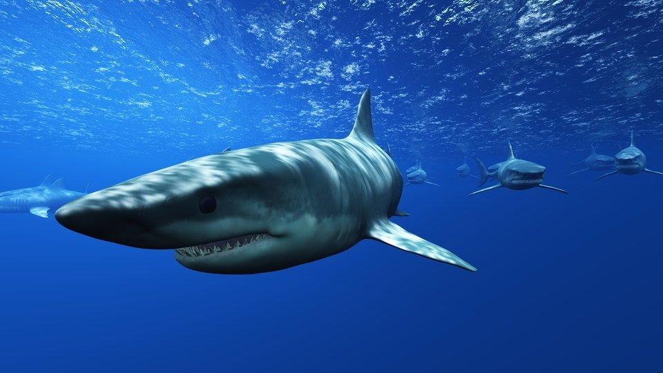 サメ 写真