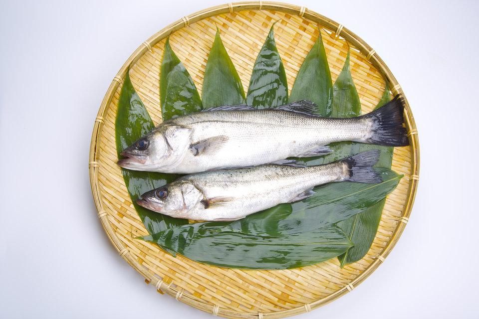 スズキ 魚 シーバス 写真
