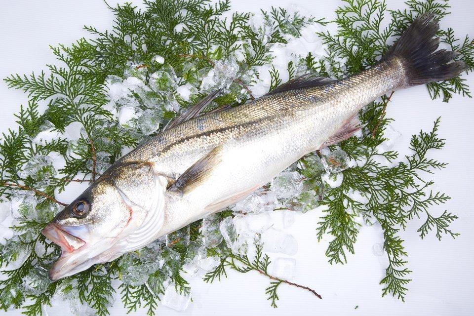 スズキとシーバスとは同じ魚?スズキの見分け方を詳しくご紹介!