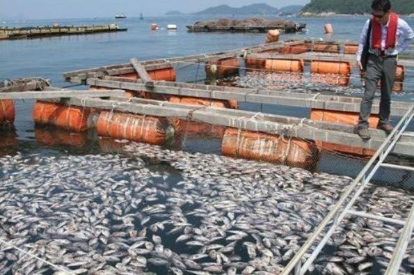 魚 大量死 写真