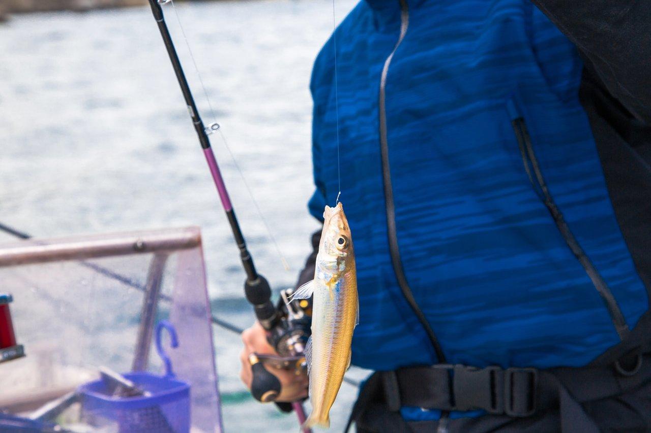 キス キングジョージホワイティング 釣り人 写真