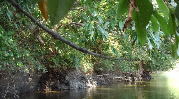 枝 水面 写真