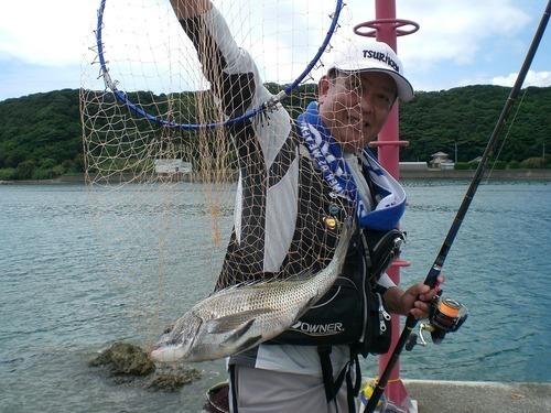 夏はウキダンゴ釣りでクロダイを...