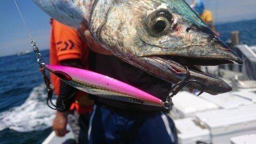 サワラ ジグ 釣り人 海 写真