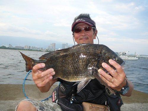 釣り人 男性 クロダイ タモ 海 写真