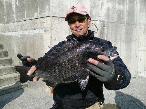 釣り人 男性 クロダイ 写真