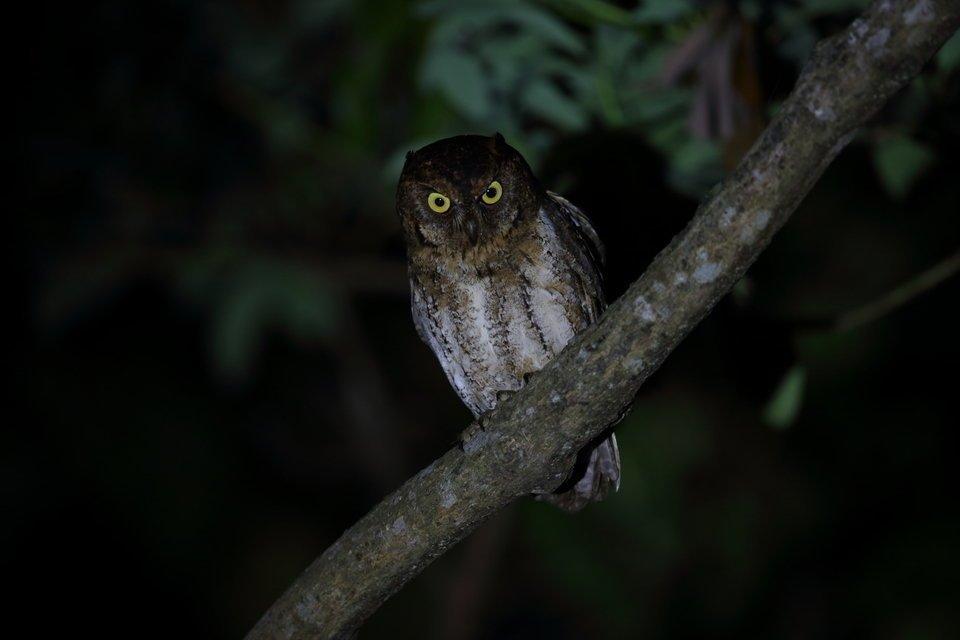 フクロウ 夜行性 写真
