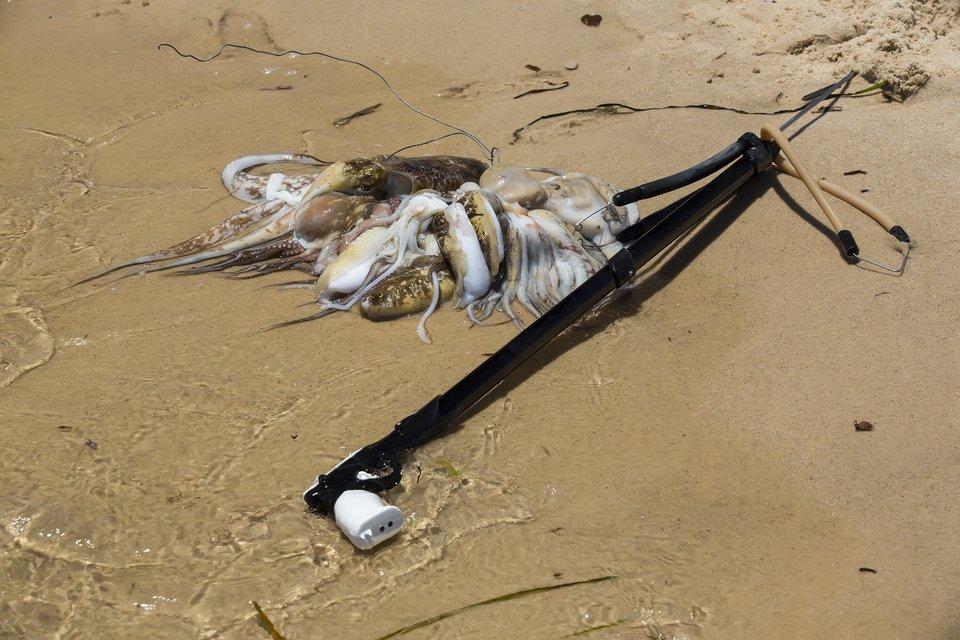 タコ イカ 水中銃 写真
