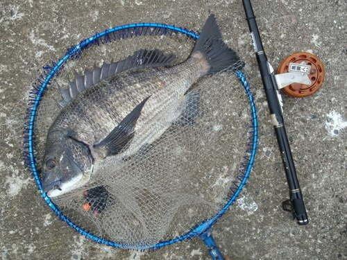 クロダイ タモ 釣り竿 写真