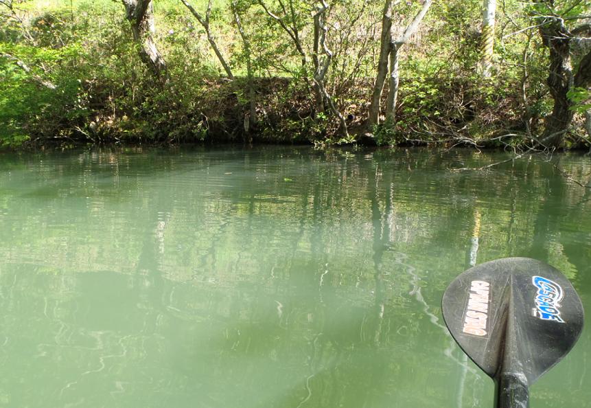 池 パドル 写真