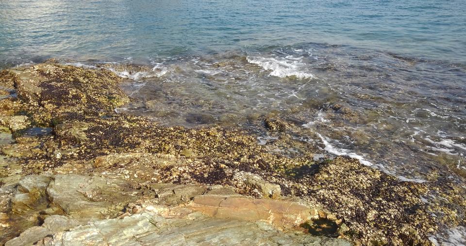 海岸 写真