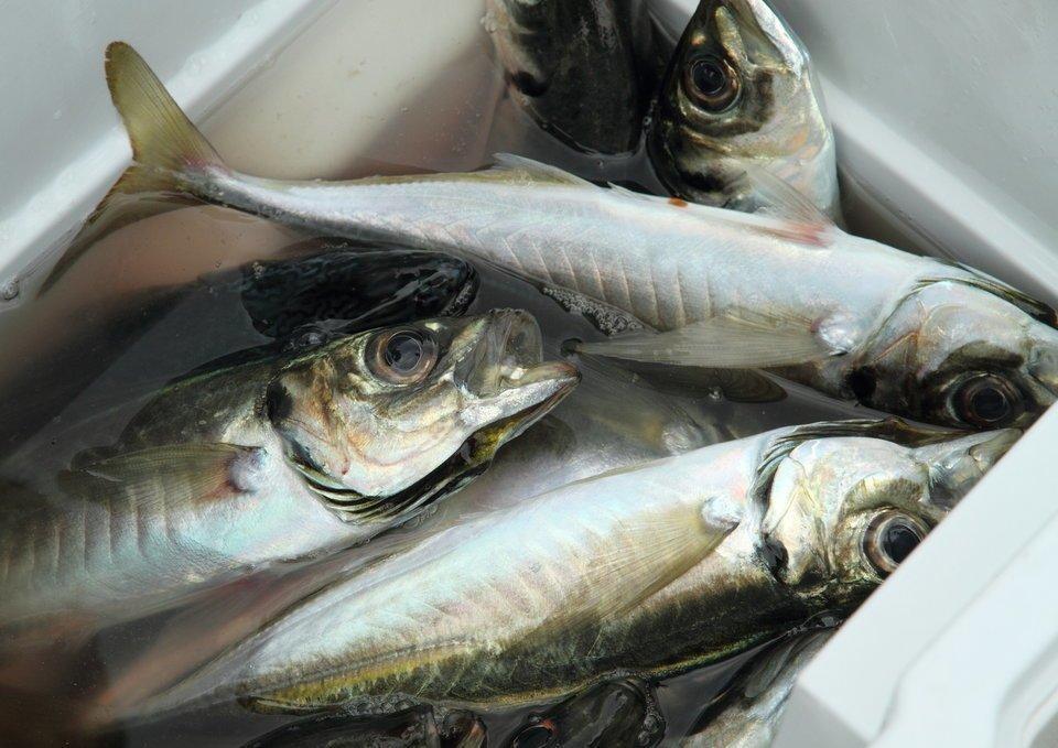【2020年】釣れるアジングロッドTOP15!価格や特徴をおすすめ順に徹底比較!