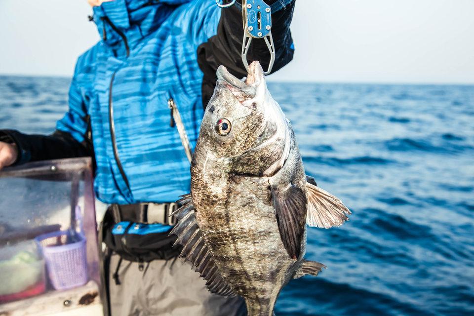 魚 海 釣り