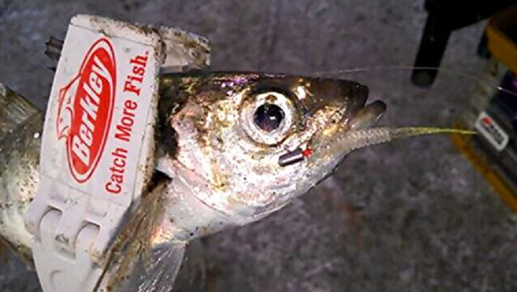 ワーム 魚 写真