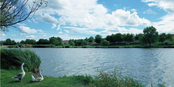 ブラックバスがいる湖の様子の写真
