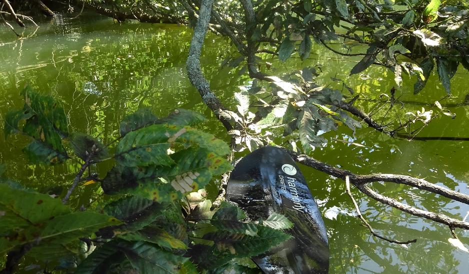 木 水面 写真