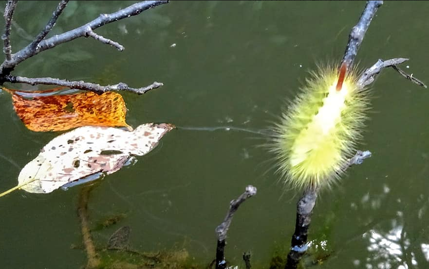 虫 水面 写真