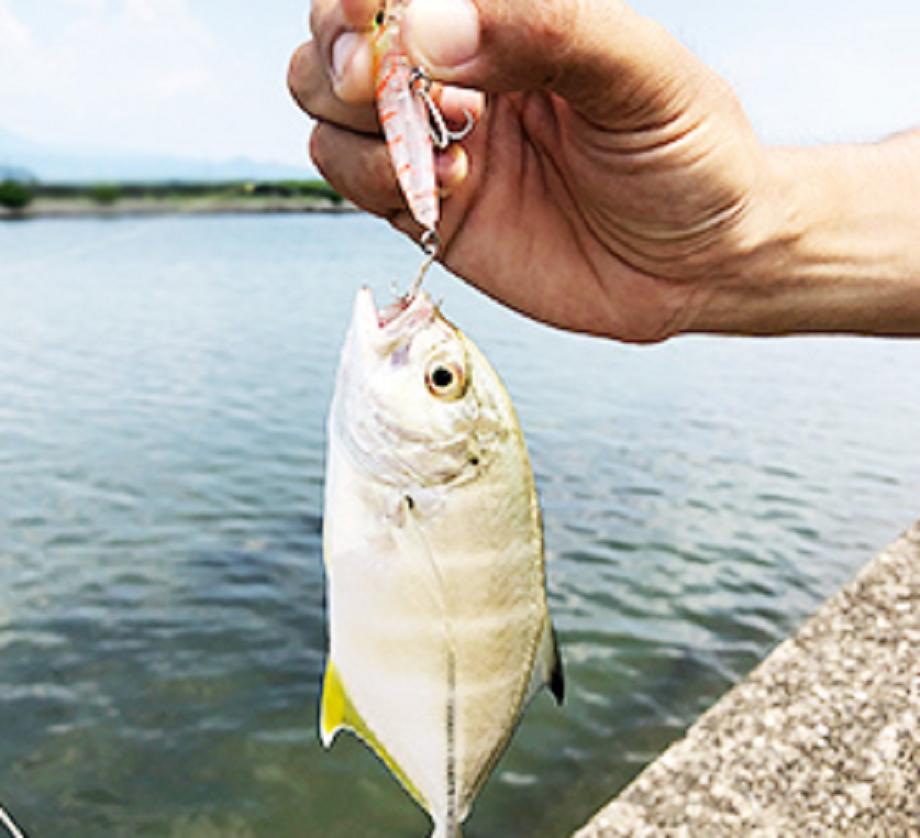 魚 ルアー 写真