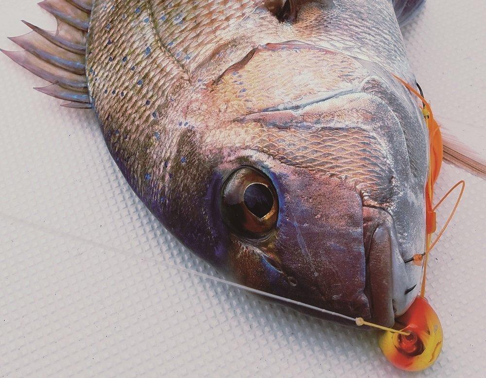 タイゲームSSDで釣った真鯛の写真
