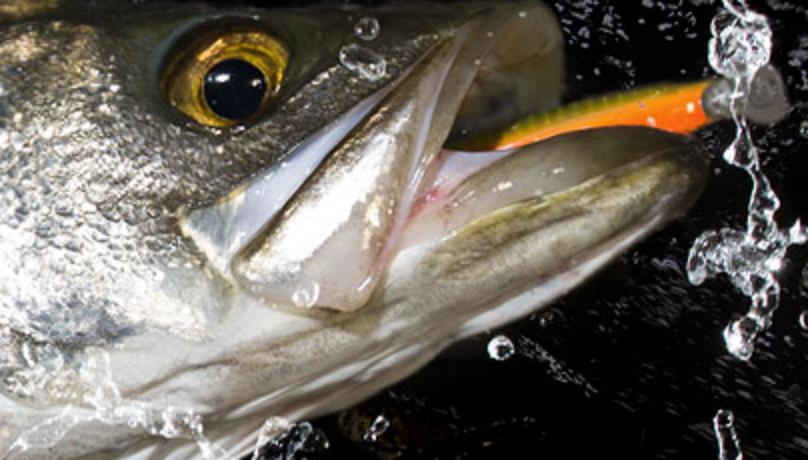 海釣り用ルアーの選び方!人気メーカーのおすすめミノー・ジグ・ワームなどを徹底チェック