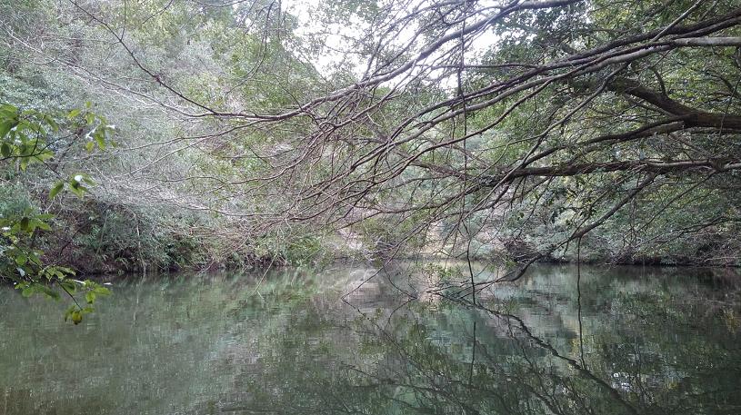 釣り場の景色