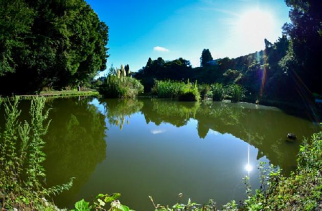 池の全景写真