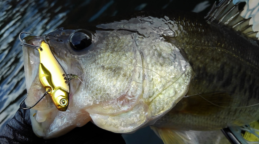 ルアーと魚のアップ写真