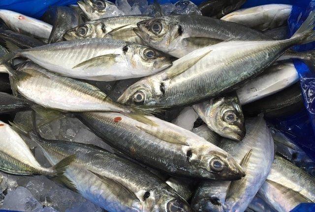 アメリカ 魚