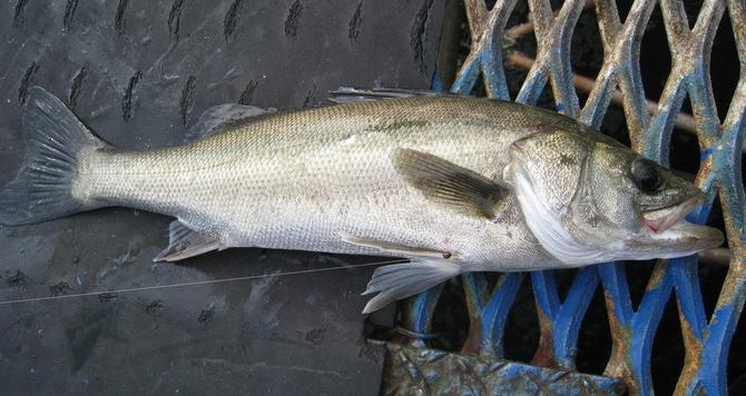 魚のアップ写真