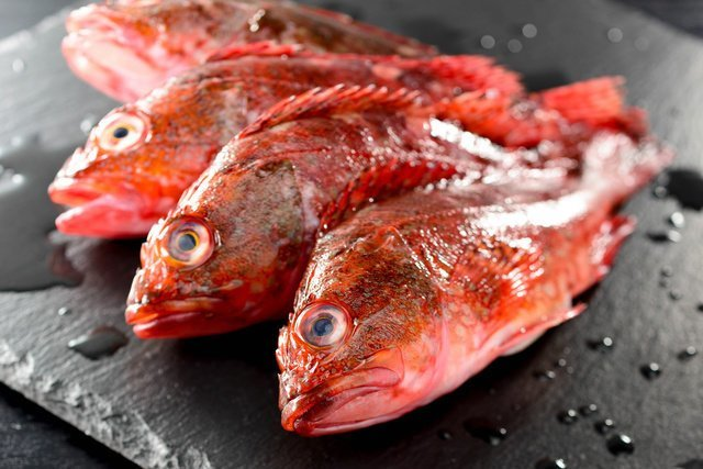 カサゴ ウッカリカサゴ 魚 釣り