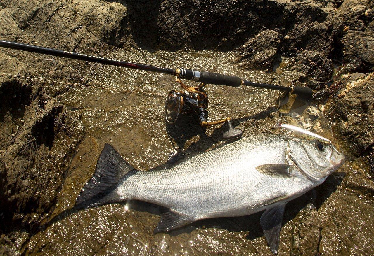 釣果とロッドの写真