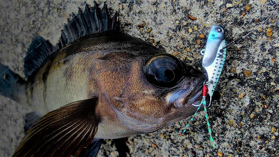 魚とルアーのアップ写真