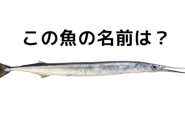 【上級編】漁師にしかわからない! #魚名当てクイズ